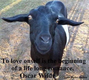 Wilde Goat